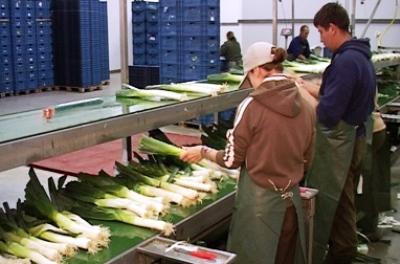 Verhoest Marc Leek Harvester For Sale UK
