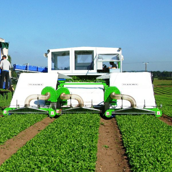 Vegetable Machinery For Sale