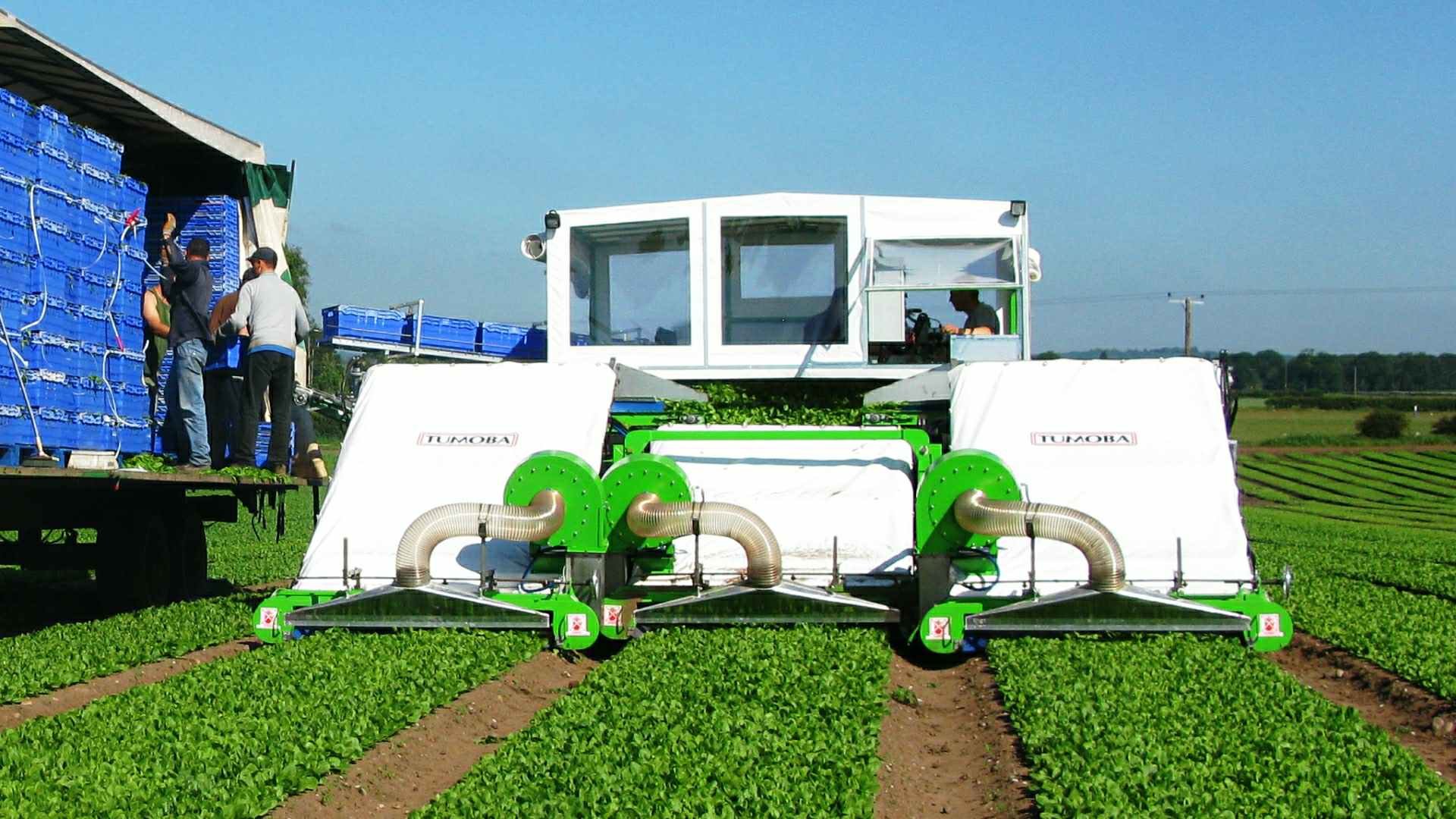 Burdens Group Limited Vegetable Machinery Division