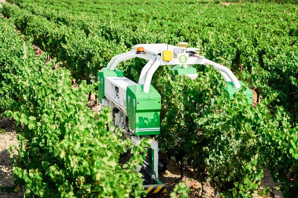 The Burdens Group Naio Technologies TED vineyard weeding robot